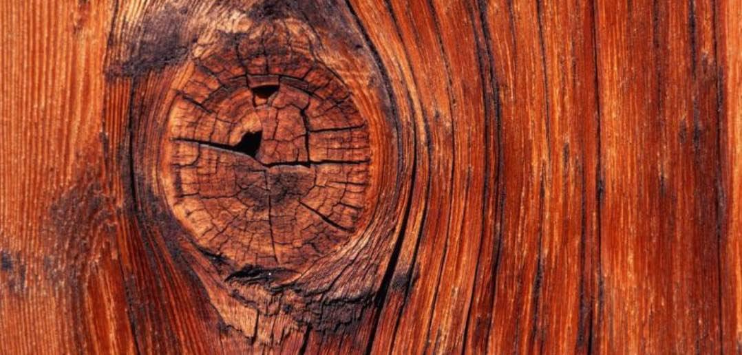 Emanuele Trevi Il popolo di legno