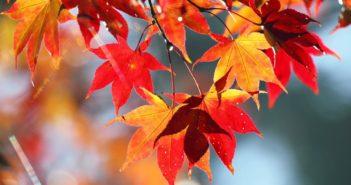 nicola-barilli-italia-in-autunno