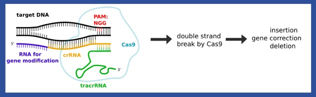 CRISPR - Cas9